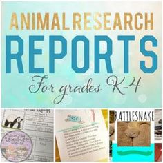 Animal Report MiniBook  Kindergarten Shared Research Project