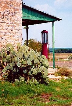 Cactus in Driftwood, Texas