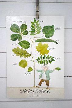 Majas lövträd - stort vykort