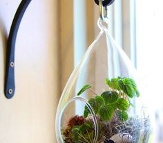 This DIY Terrarium makes a great gift, was assembled in a matter of minutes and looks really beautiful. Glass globes are now readily available at gar...