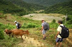 Private 3-Day Trekking Tour: Pu Luong Nature Reserve Including Homestay from Hanoi This 3-day, privately guided trek through the picturesque regions of the Pu Luong Nature Reserve offers a great combination of northern Vietnam's landscapes and traditional cultures. Enjoy the surrounding beauty of terraced rice fields and the biodiversity of limestone mountain forests on this unforgettable eco-adventure, led by an experienced guide. Visit local villages and stay for two nigh...