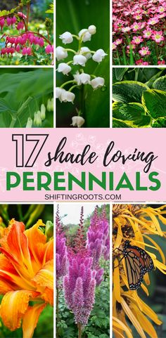 Need some landscaping ideas for your shady flower bed, front yard, or backyard? Heres 17 beautiful perennial flowers for shade that grow in USDA Hardiness zones 3 (or higher). Lots of easy to grow plants for the beginner gardener. #flowers #perennials #shade #shadeflowers #shadeperennials #gardening #beginnergardener #easytogrow #plants