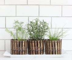 Check out how to make DIY planters from clothespins @istandarddesign
