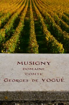 Chambolle-musigny French Wine, Mcdonalds, Vineyard, Outdoor, Wine, Outdoors, Vine Yard, Vineyard Vines