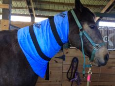 Tall x Wide w/ Spandex-Velcro Straps.Already a vet favorite - the Equi Cool Down Equine Neck Wrap provides gentle, non-evasive cooling for neck soreness, post-injection swelling or overall cooling via the jugular. Tack Shop, Old Barns, Neck Wrap, Wraps, Horses, Cool Stuff, English Tack, Animals, Spandex