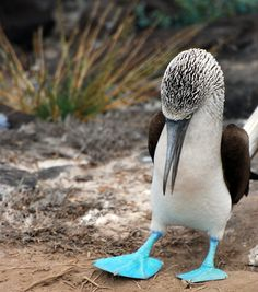 Dont u dare call me a blue footed boobie. I don't care if my feet are freakin blue!