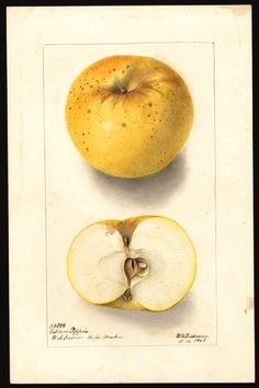 NAL Pomological Watercolor Collection