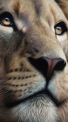 Amazing Lion drawing or painting. Lion of Judah Prophetic art. This is so beautiful! Look at those eyes! Lion Images, Lion Pictures, Lion And Lioness, Lion Of Judah, Nature Animals, Animals And Pets, Cute Animals, Wild Animals, Baby Animals