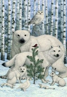 Hallmark Marjolein Bastin Christmas Cards | Bywaters Animals And Birch Trees Christmas Boxed Card .... haven't seen this here, but it's very lovely!