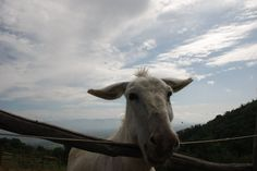 A small lonely donkey looking for friends