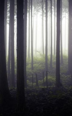 haunted foggy woods. i just wanna dance there.