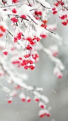 Love snow