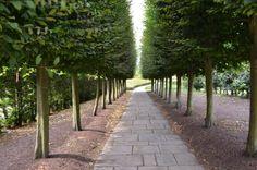 tree lined walkway - Google Search