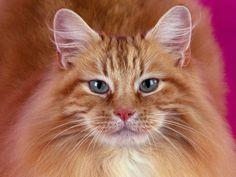 Gatos - Fondos de escritorio gratis: http://wallpapic.es/animales/gatos/wallpaper-32008