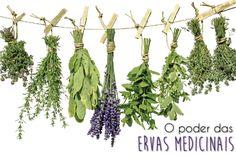 Quem nunca ouviu falar de uma receita milagrosa que alivia a dor de cabeça, estômago, gripe entre tantas outras? Pois então! Muitas dessas receitas estão associadas às plantas ou ervas medicinais. …