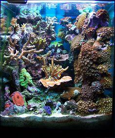 16 Gallon Nano Reef. This tank looks way bigger then 16 gallons.