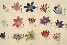 Untei Sekine  Anemones,1830-1835