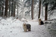 dreamy+winter+wonderland