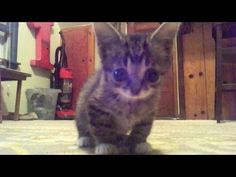 New Footage Of Baby Lil Bub Is Just As Magical As You'd Expect