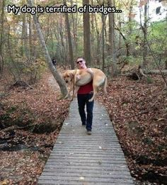 I just wanna know what is behind him on that trail.....back there at the treelike in the left hand side of the pic.....