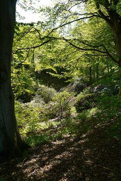 Sofiero, Bilder från parken 13/5-2012 by Sofiero Slott och Slottsträdgård, via Flickr