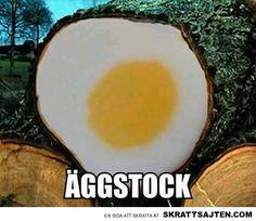 Äggstock