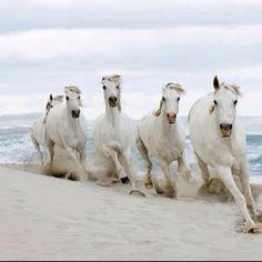 Wild horses running on the beach