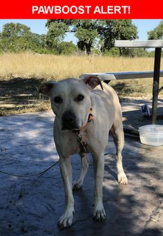 Is this your lost pet? Found in Spring Branch, TX 78070. Please spread the word so we can find the owner!  Description: Neutered, white lab mix, orange collar no tags.  Nearest Address: Hwy 311/281