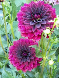 I Love My Garden: My Reds