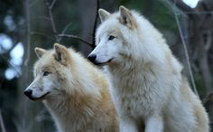Two brothers by Rainer Leiss
