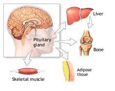 HGH hormona crecimiento humana, resea de ghr1000, hgh 1000, sytropin, genf20, z-tropin y provacyl