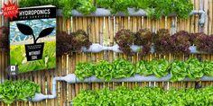 Hydroponics Gardening The Alternative Daily Hydroponics System, Hydroponic Gardening, Organic Gardening, Gardening Tips, Backyard Coop, Chickens Backyard, Edible Plants, Edible Garden, Growing Herbs