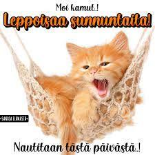 Facebook Sunday Quotes, Cats, Animals, Facebook, Gatos, Animales, Animaux, Animal, Cat