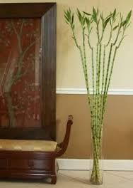 Resultado de imagen para tiendas de lucky bamboo
