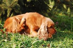 Many of us are affected by the changing seasons, especially if it includes a sudden and drastic change in temperature. One of the most common symptoms we get is dry, itchy skin – and it can happen to our dogs, …