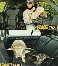 Abdul loves sheep :-D