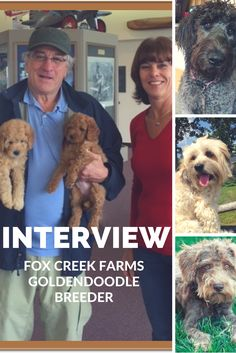 Interview with Amy from Fox Creek Farms. Amy is a goldendoodle breeder who has bred doodles for the likes of Robert Deniro. Read more...