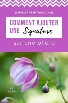 How to add a signature on a photo – Anita Bobbie Photo Signature, Create A Signature, Fotografie Hacks, Insta Snap, K Project, Photo Retouching, Photoshop Photography, Photo Tips, Ajouter