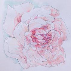 Peony illustration watercolor #illustration #flowers