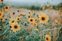 (19) Tumblr May Flowers, Pretty Flowers, Wild Flowers, Aesthetic Iphone Wallpaper, Aesthetic Wallpapers, Instagram Boost, Ferdinand The Bulls, Artsy Photos, Yellow Daisies