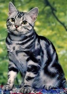 Beautiful. =^..^= http://www.kittyprettygifts.com #cats #lolcats #memes #cute