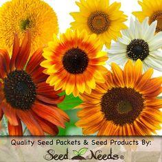 "100 Seeds, Sunflower ""Crazy Mix"" (10+ Varieties) Seeds by Seed Needs Seed Needs: Flowers,http://www.amazon.com/dp/B005469D8U/ref=cm_sw_r_pi_dp_7X.ftb1E2314SMT0"