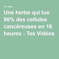 Une herbe qui tue 98% des cellules cancéreuses en 16 heures - Tes Vidéos