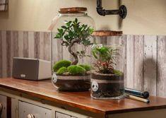 Ficus, Terrariums, Planter Pots, Gardens, Wrapping, Recyle, Creative, Terraria, Outdoor Gardens