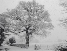 In the snow storm by Paul Arrowsmith
