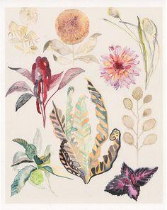Botanicals No.2 - Archival Print