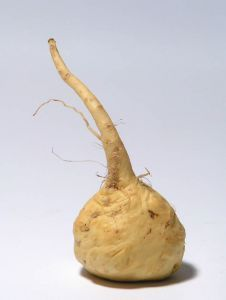 maca is a cruciferous root found growing in the high regions of Peru and has been cultivated for about two thousand years. It has been traditionally and is currently used as a food. The Peruvians believe it gives strength and endurance, enhances ones fertility, and supports pregnancies.