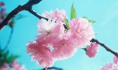 gamcurs Stock Quotes, Business News and Data from Stock Markets Business News, Business Quotes, Flowering Cherry Tree, Stock Market Index, Stock Quotes, Cold Shower, News Quotes, Bloom, Marketing