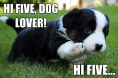 <3 I just love puppies, Border Collies, Dogs and most animals....