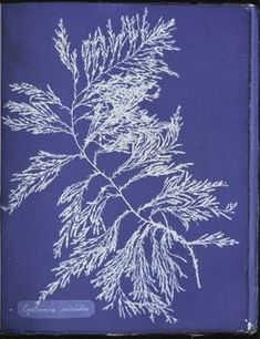Beautiful Impressions: Anna Atkins's